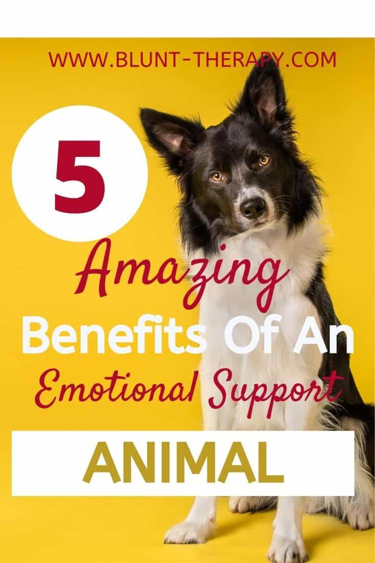 5 AMAZING BENEFITS OF AN EMOTIONAL SUPPORT ANIMAL
