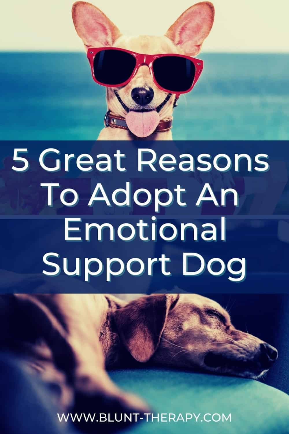 5 Great Reasons To Adopt An emotional Support Dog